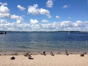 Fotografier zur Szene 3: Gänse an der Ostsee