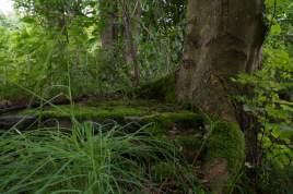Baum-Ruine